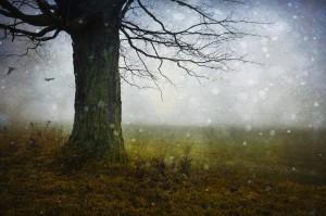 Walking Meditation: Inspirasjonsvandring i november @ BALDRON i skogen | Akershus | Norge
