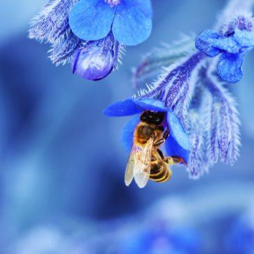 Artensterben und Artenvielfalt