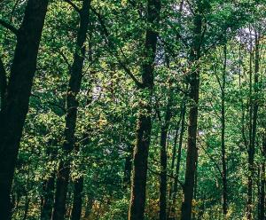 Dialog mit Bäumen @ Schloß Freudenberg, Wiesbaden